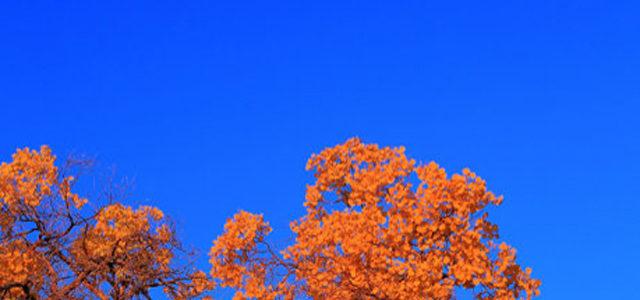 Golden Autumn Under The Moon